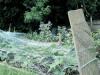 landscape-of-helens-garden